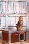 Cușcă cu încălzire infraroșu pentru pisici Thermo WOODY CAT cu geam panoramic (LxlxÎ:54x38x28cm)