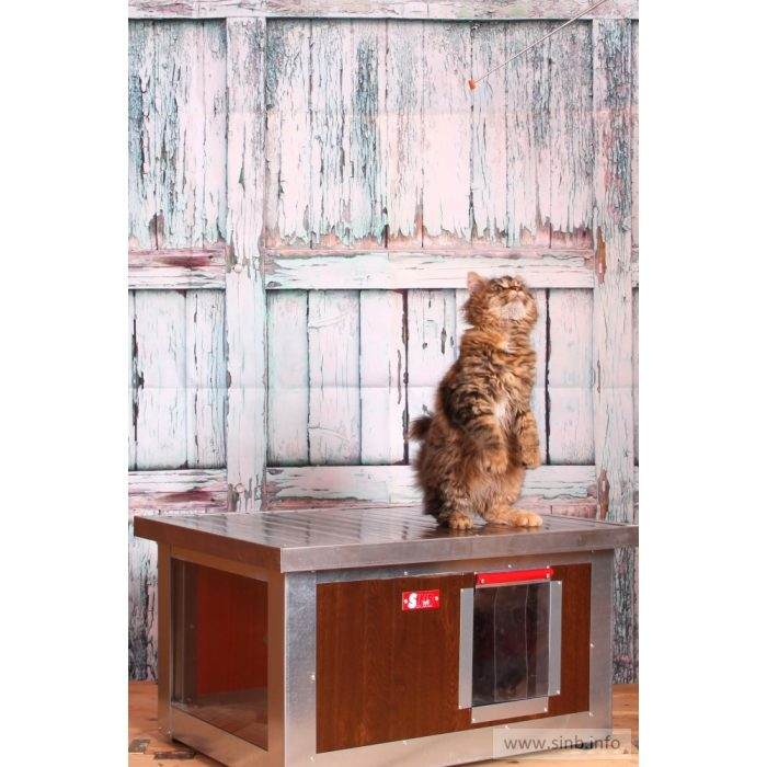 "[WH_C1-W] Thermo Woody cicaház panoráma ablakkal ""CAT"" belméret (H*SZxM:54x38x28cm)"